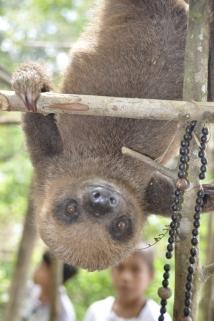 A sloth says hello